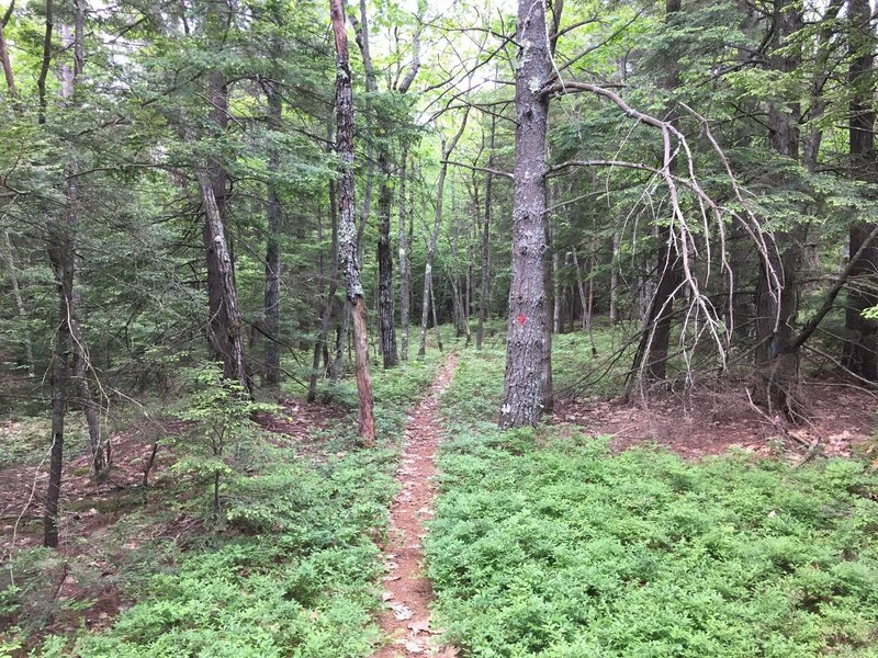 Follow the red blazes through some nice singletrack stretches.