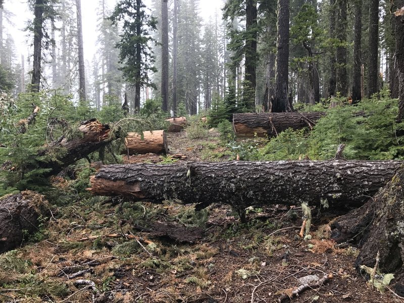 Fallen trees are always in the process of being cleared along the Mill Creek Trail.