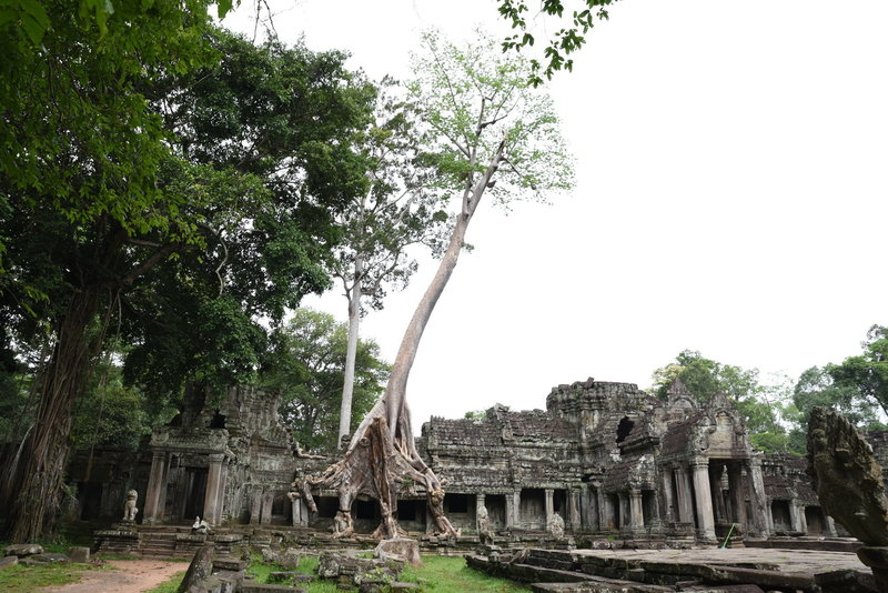 Like at other ruins, trees have taken root and grow from the buildings.