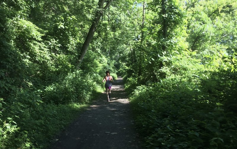 The  Lower Susquehana Greenway Trail is surrounded by a beautiful green tunnel.