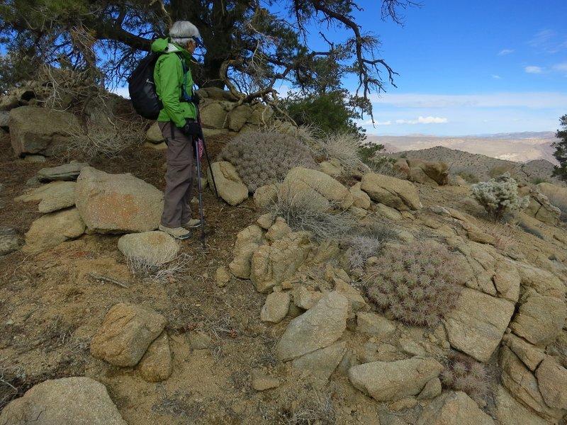 Various cacti, shrubs, and juniper grow along the Tingman-Holland Mine Spur.