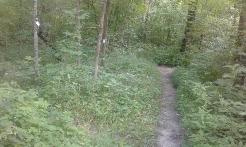 #1 Connector Trail meets the Gans Creek Main Loop. It's a potentially confusing spot. South trails go to Gans Creek Trailhead and north to Wagonwheel Trailhead.