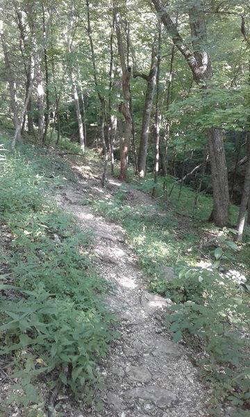 #1 Connector Trail follows a mixed tread through the forest.