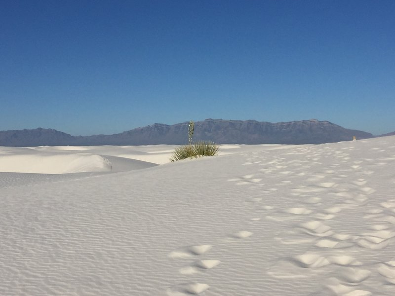 White Sands National Monument is an incredible area!