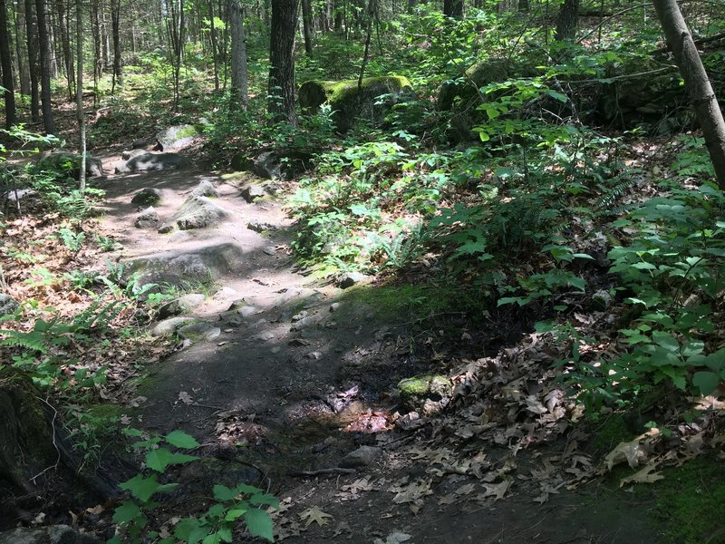 The Acorn Trail has enough rocks in the tread that you'll want to pay attention to your foot placement.