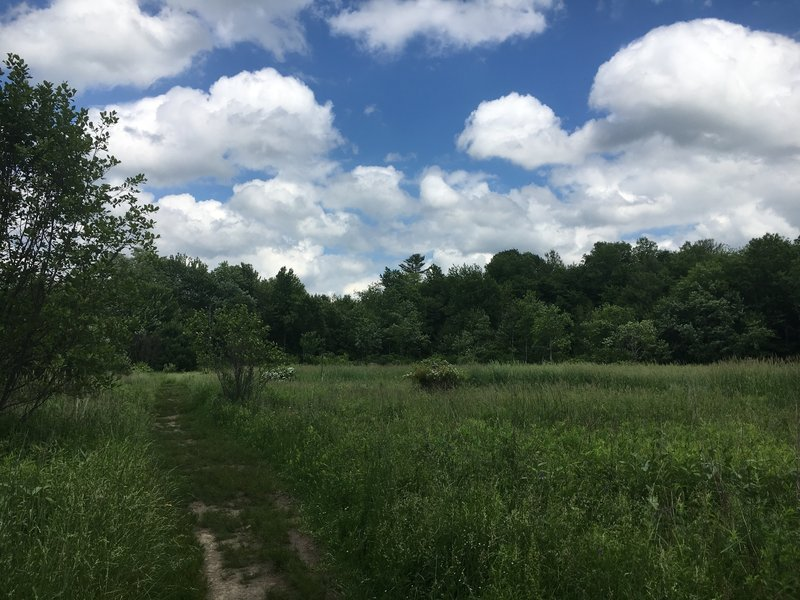 Otter Way Meadow is sure to grow tall summer grasses.