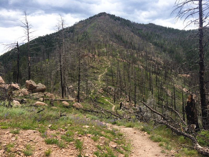 A singletrack trail heads up to Bear Peak from the West Ridge.