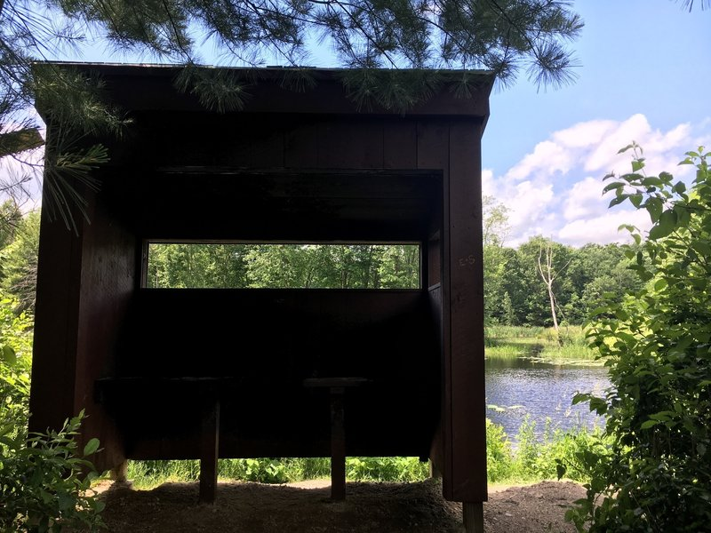A wildlife blind aids your chances of a sighting at Beaver Pond.