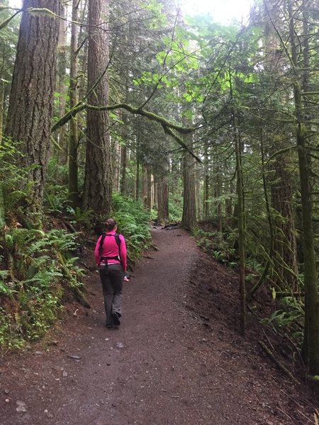 The Twin Falls Trail is wide and easy to travel.