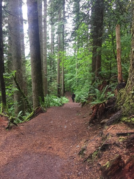 The Twin Falls Trail's smooth, wide tread permits easy passing of other trail users.