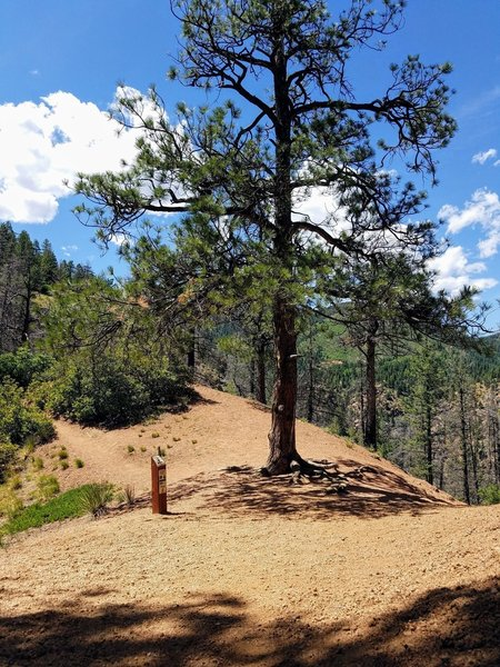 Keep an eye out for the junction of the Mt. Cutler Trail and Mt. Muscoco.