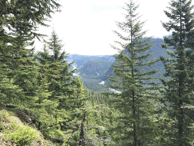 Just as you crest the ridge, a well-marked viewpoint provides beautiful views of the Nisqually River.