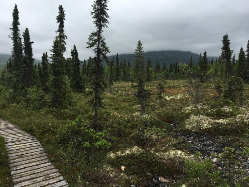 A boardwalk amid the tundra leads adventurers through beautiful meadows like this.