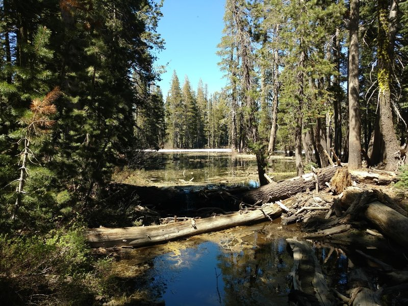 This shady, forested lake provides a pleasant sight along the Salmon Lake Trail.