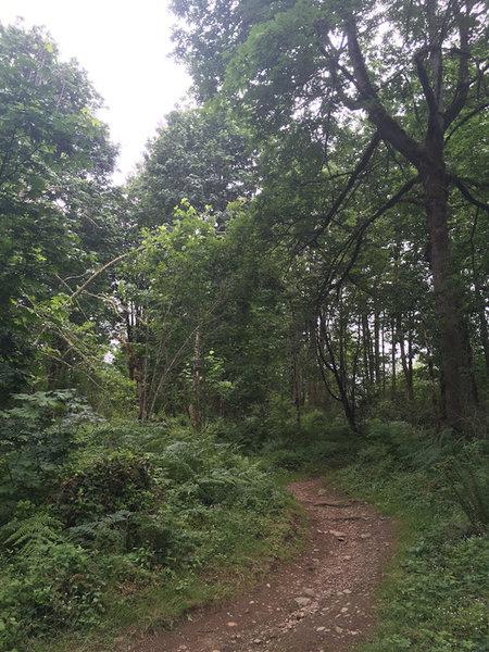 Singletrack trail at Soaring Eagle Regional Park.
