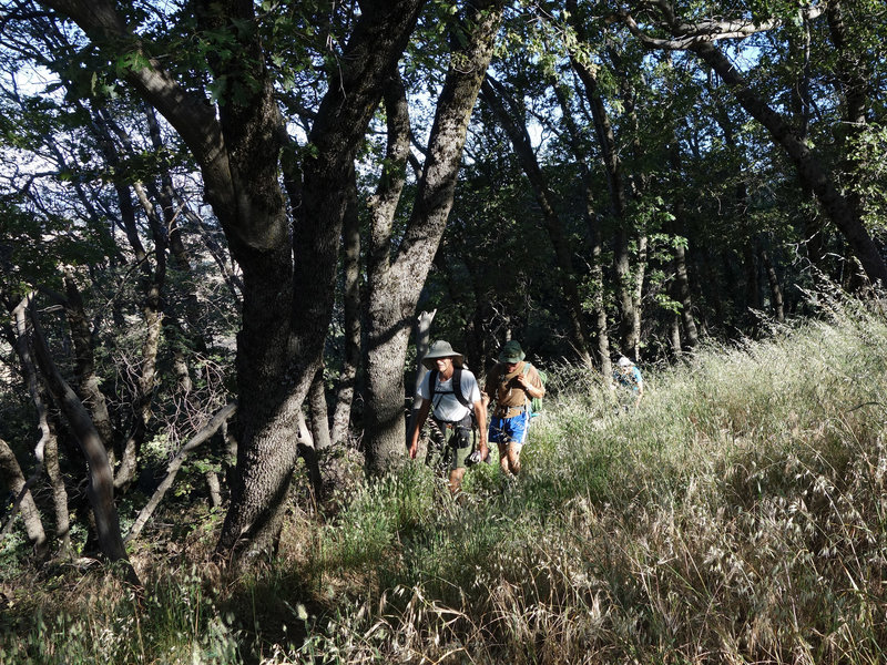 Two hikers make their way along the Five Oaks Trail.