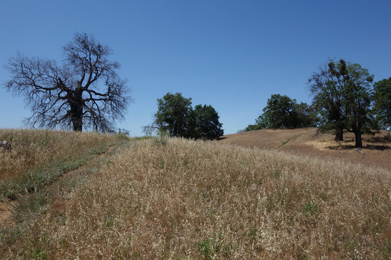 Trees dot a grassy field at the junction of the Five Oaks Trail and the main Volcan Mountain trail.