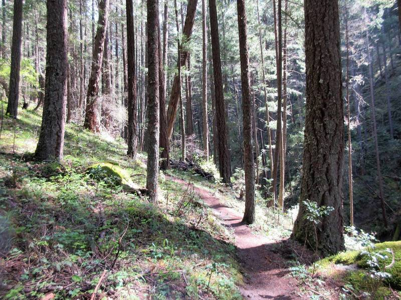 Enter the deep, forested recesses of the Snark Trail.