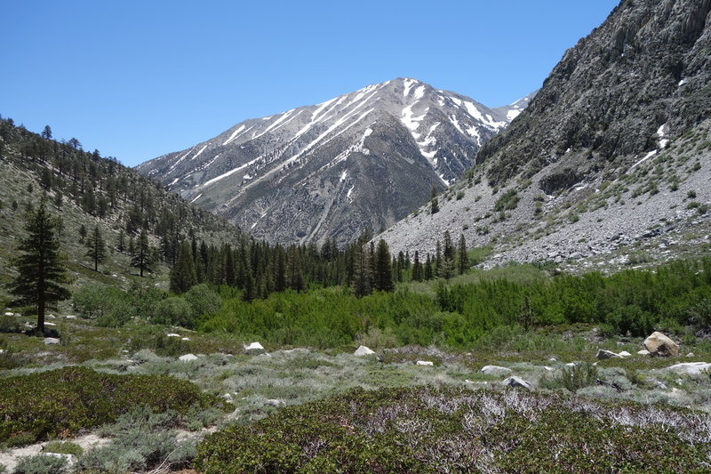 Kid Mountain (~11,860 ft) is beautiful when viewed from near the Baker Creek Trail junction.