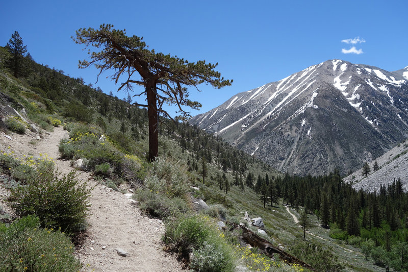 Kid Mountain (~11,860 ft) stands across the valley as the trail ascends to the Baker Creek Trail junction.