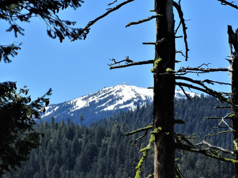 Mt Ashland from Lewis Loops (Gyre) (Robert Nicholson photo)