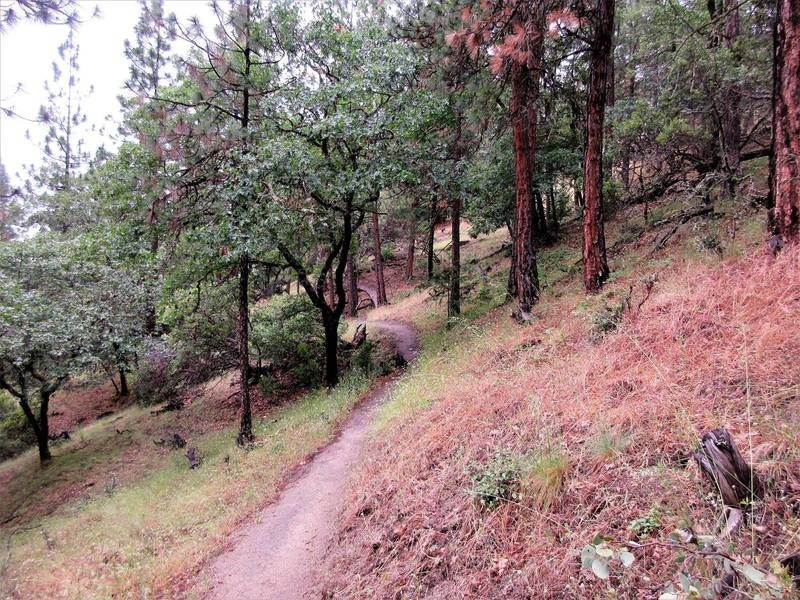 Lower Red Queen Trail is located on dry side hills full of Manzanita and Madrone (and poison oak).