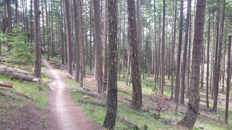 Enjoy smooth singletrack along the Caterpillar Trail.