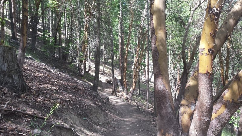 The uphill section of the Caterpillar Trail will test your lungs!
