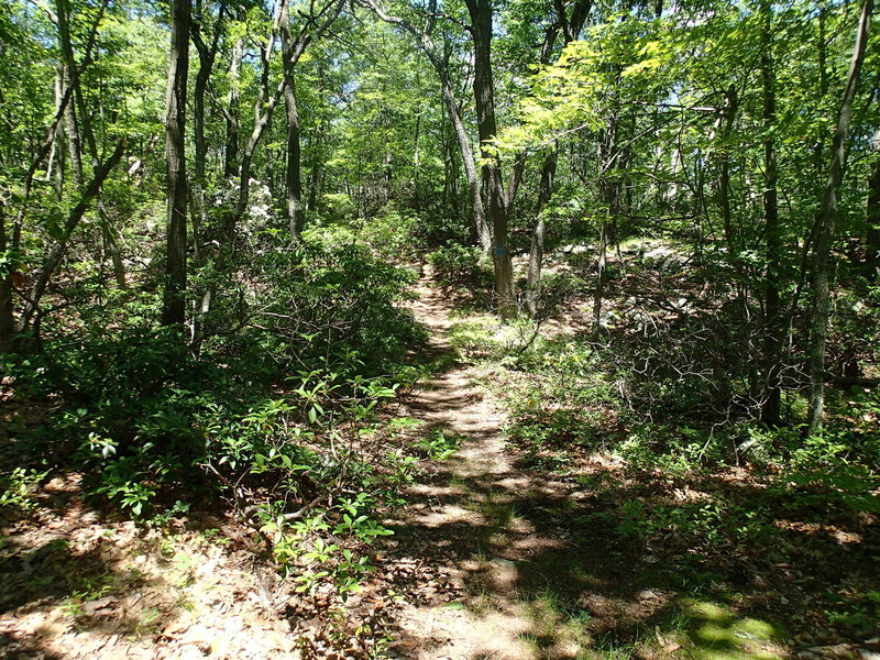 This is the start of the Osborn Loop Trail.