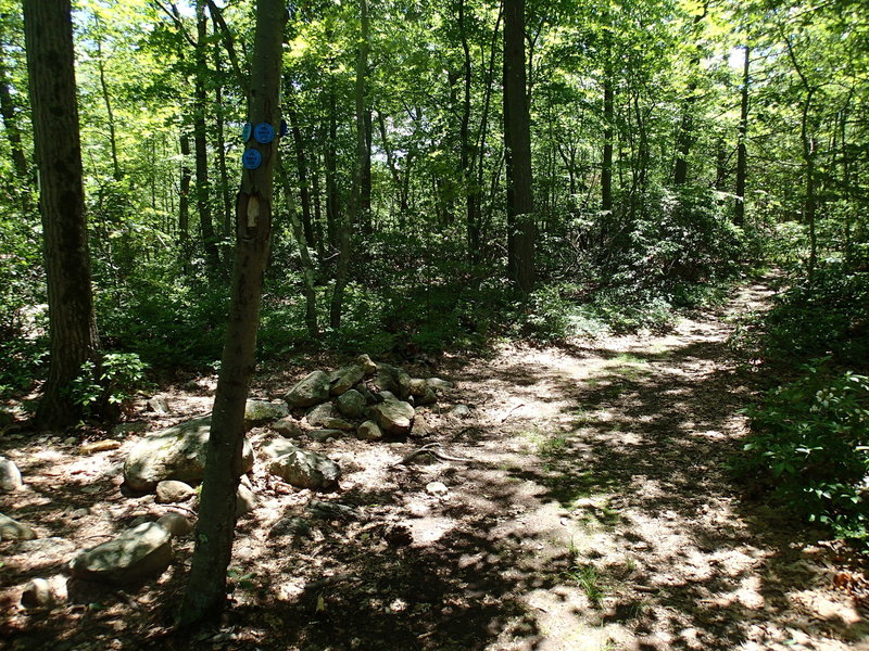 At the end of the Osborn Loop Trail you can jump right back on the Appalachian Trail.