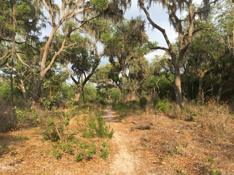 Some portions of the trails in Sweetwater Preserve can be a little sandy.