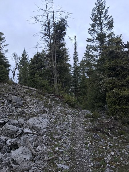 This is what the majority of the trail looks like.