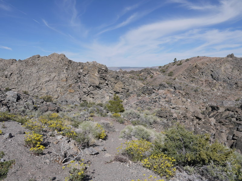 Yellow wildflowers bloom at Panum Crater.