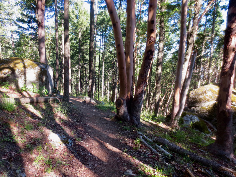 White Rabbit Trail offers plenty of trailside granite boulders and madrones.