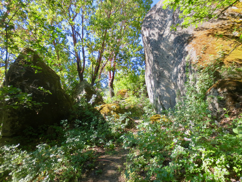 Some of the boulders on the White Rabbit Trail, like the one on the right, are over 30 feet tall!