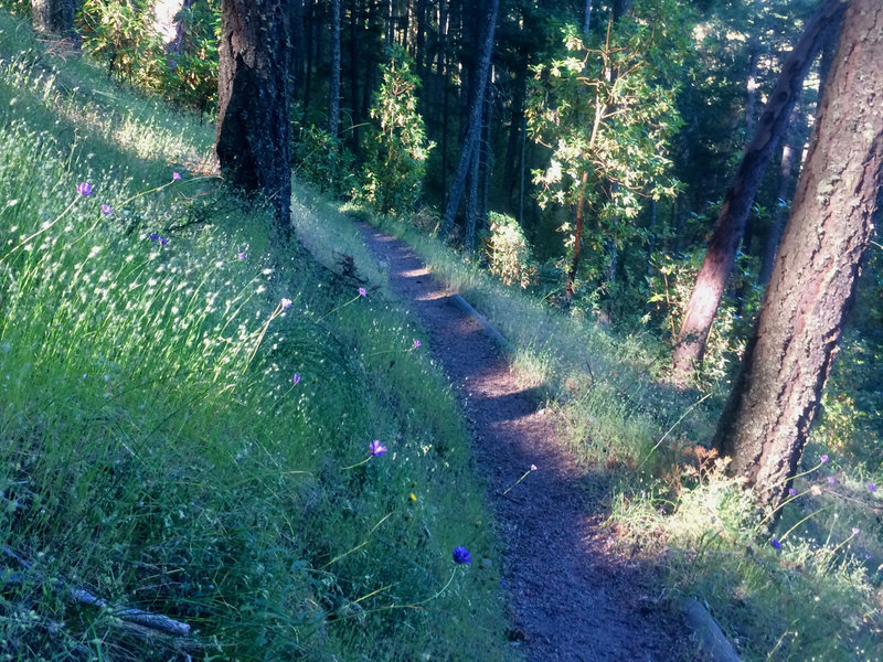 The Mike Uhtoff Trail is pleasant heading west into the shade.