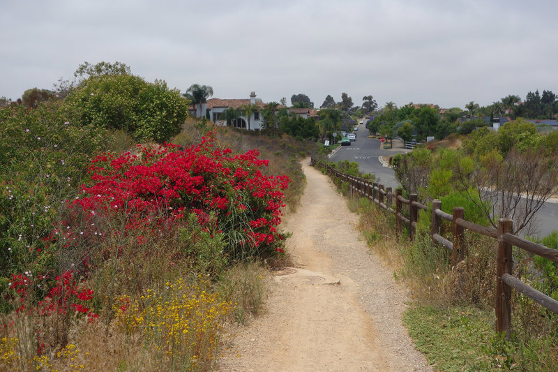 The multi-use trail adjacent to Rancho Toyon Place is a great spot to get out and stretch your legs.