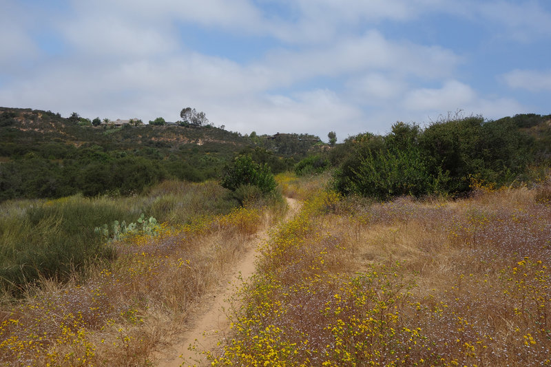A yellow bloom lines the Cobbles Alternative trail.