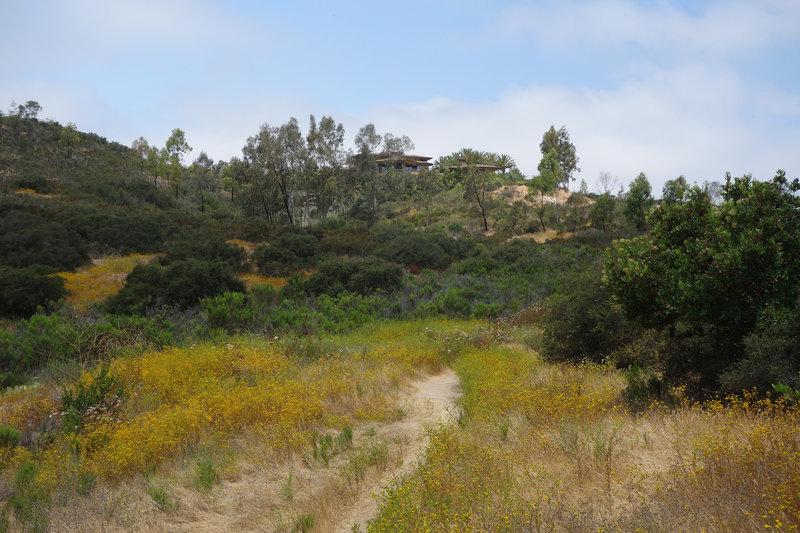 Yellow blooms blanket the Rancho Tonyon Trail.