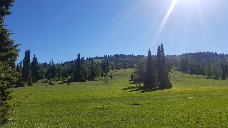 This wonderful mountain meadow awaits along the trail.