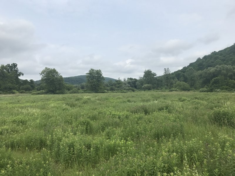 An open field greets you after making the Route 341 crossing on the AT.