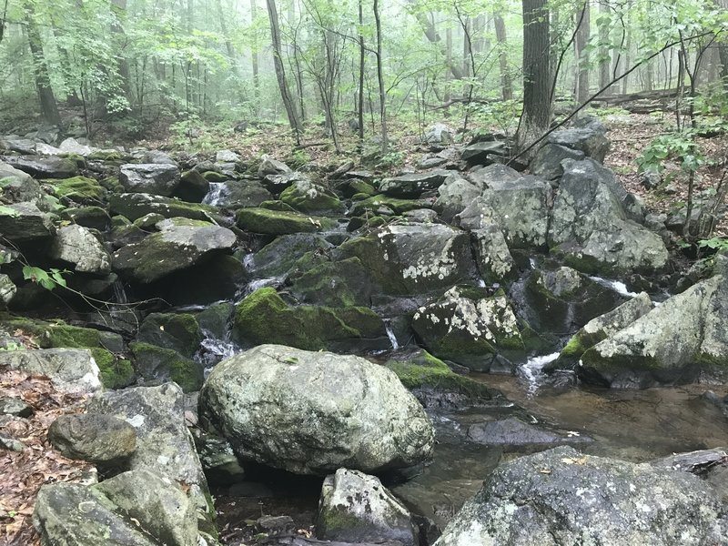 Thayer Brook makes a great place for water and a rest.