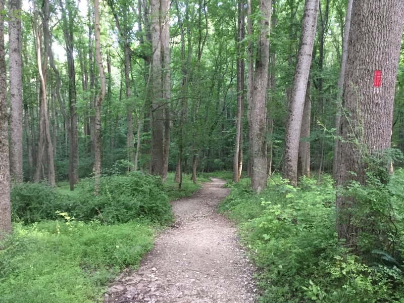 Begin your journey down toward the Patapsco River on the Plantation Trail.