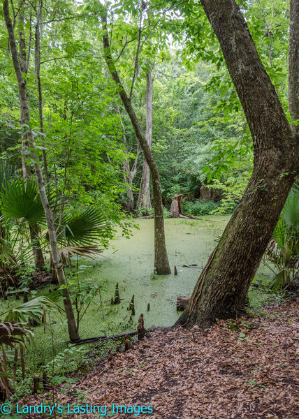 The beginning of the trail passes this verdant swamp.