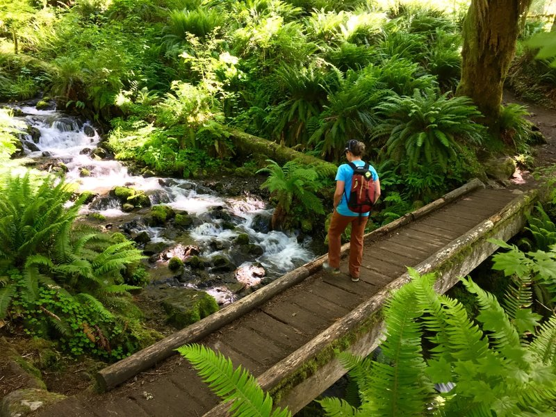 This sturdy bridge marks one of the many pretty stream crossings on the Hoh River Trail.