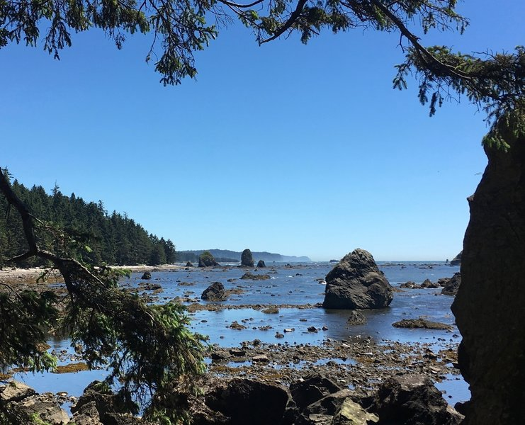 The Ozette Coast is gorgeous in the throes of summer.