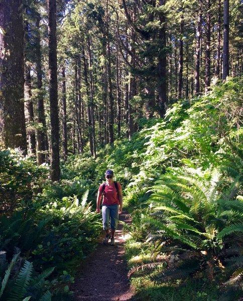 The Cape Alava Trail traverses dense coastal forests.