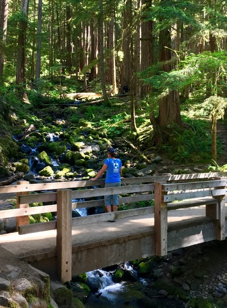Stop and enjoy the view on the way to Sol Duc Falls.
