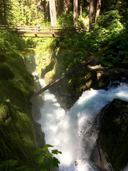 Sol Duc Falls cuts right through age-old rainforest.