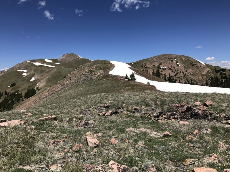 Enjoy the view looking north toward Ute Peak after a little off-trail climb from the end of the Acorn Creek Trail.